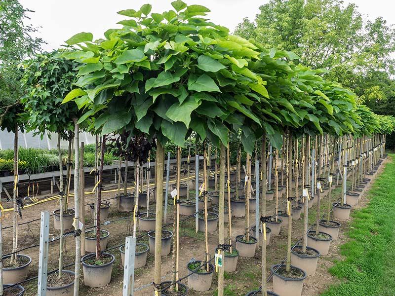 Gartenpflanzen Schimmele Baumschule
